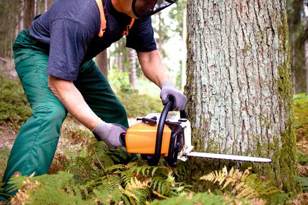 treehab arborist