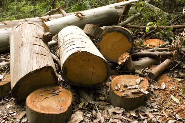 treehab free logs